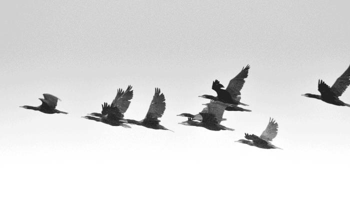 Florida Migratory Birds